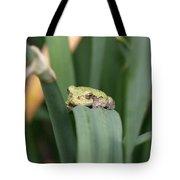 Soooo....cute - Tree Frog Tote Bag