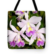 Sophronitis Orchid Tote Bag
