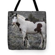 South Steens Wild Stallion Tote Bag