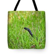 Southern Black Racer Tote Bag by Al Powell Photography USA