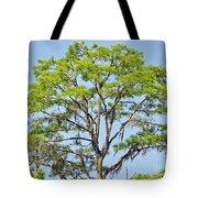 Southern Cypress Tote Bag