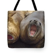 Southern Elephant Seal Pair Calling Tote Bag by Konrad Wothe
