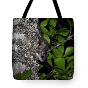 Southern Flying Squirrel Tote Bag