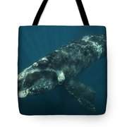 Southern Right Whale Calf Valdes Tote Bag