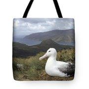 Southern Royal Albatross On Nest Tote Bag
