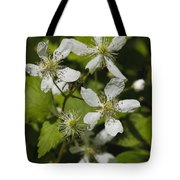 Southern Sawtooth Highbush Blackberry Blossoms - Rubus Argutus Tote Bag