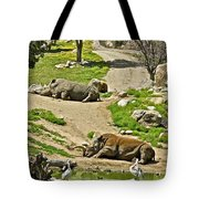 Southern White Rhinoceros In San Diego Zoo Safari Park In Escondido-california Tote Bag