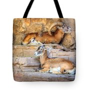 Spanish Ibex Tote Bag