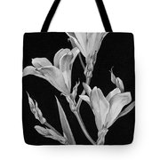 Sparaxis Flowers Tote Bag