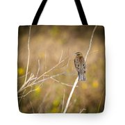 Sparrow In Marshland Tote Bag by Carolyn Marshall