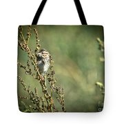 Sparrow In The Weeds Tote Bag