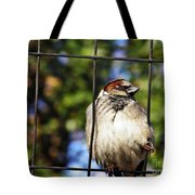 Sparrow On A Wire Fence Tote Bag
