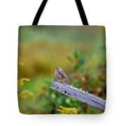 Sparrow On Board Tote Bag