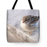 Sparrow - Takeoff Problems Tote Bag