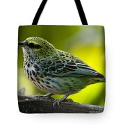 Speckled Tanager - Tangara Guttata Tote Bag