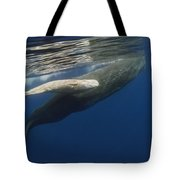 Sperm Whale Mother And Albino Baby Tote Bag