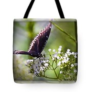 Spicebrush Swallowtail Butterfly Tote Bag