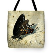 Spicebush Swallowtail Papilio Troilus  Tote Bag
