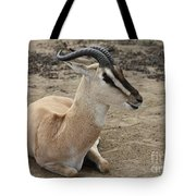 Spiral Horned Antelope Tote Bag