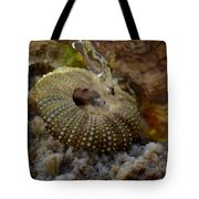 Splash Tote Bag by Riad Belhimer