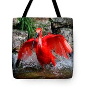 Splish Splash - Red Ibis Tote Bag