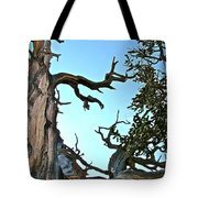 Spooky Bristlecone Pine At Spectra Point On Ramparts Trail In Cedar Breaks National Monument-utah  Tote Bag