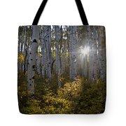 Spot Of Sun Tote Bag by Jeff Kolker