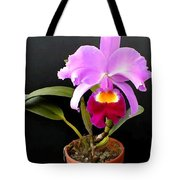 Spotlight On Purple Potted Cattleya Orchid Tote Bag