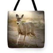 Spotlighted Mule Deer Tote Bag