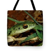 Spotted Bush Snake Philothamnus Semivariegatus Tote Bag