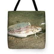 Spotted Hake Tote Bag