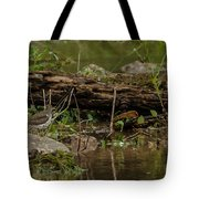 Spotted Sandpiper 2 Tote Bag