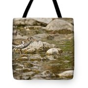 Spotted Sandpiper Pictures 36 Tote Bag