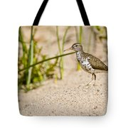 Spotted Sandpiper Pictures 45 Tote Bag