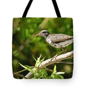 Spotted Sandpiper Pictures 48 Tote Bag