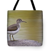 Spotted Sandpiper Pictures 51 Tote Bag