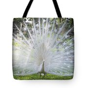 Spreading Peacock Display Tote Bag