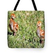 Spring Chicks  Tote Bag