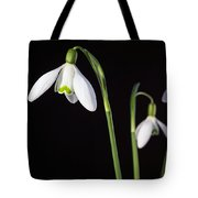 Spring Comes To A Wall Near You Tote Bag