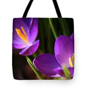 Spring Crocus Pair  Tote Bag