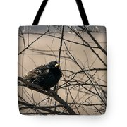 European Starling Tote Bag