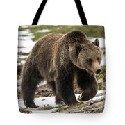Spring Grizzly Bear Tote Bag