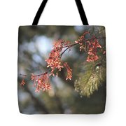 Spring Growth Bathed In Sunlight Tote Bag