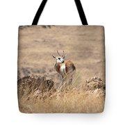 Springbok V3 Tote Bag