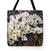 Springtime Abundance - A Bouquet Of Pure White Crocuses Tote Bag