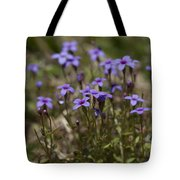 Springtime Tiny Bluet Wildflowers - Houstonia Pusilla Tote Bag