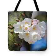 Sprouting Cherry Blossoms Tote Bag