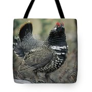 Spruce Grouse Male Courting Alaska Tote Bag