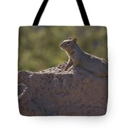 Squirrel   #8424 Tote Bag
