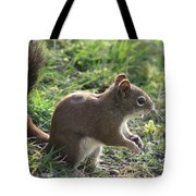 Squirrel And His Sunflower Seed Tote Bag